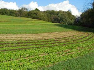 kretschmann farm